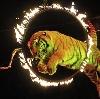 Цирки в Сокольском