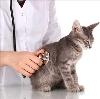 Ветеринарные клиники в Сокольском